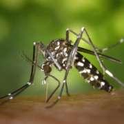 Come allontanare zanzare da casa e giardino senza insetticidi?